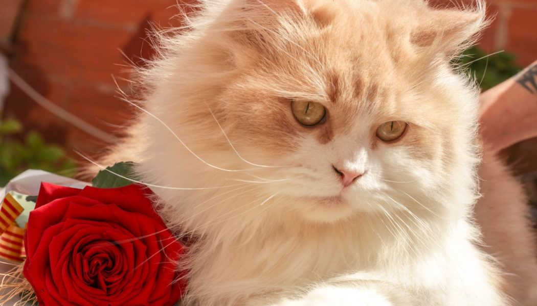 Changing trends in cat care