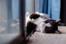 happy indoor cat